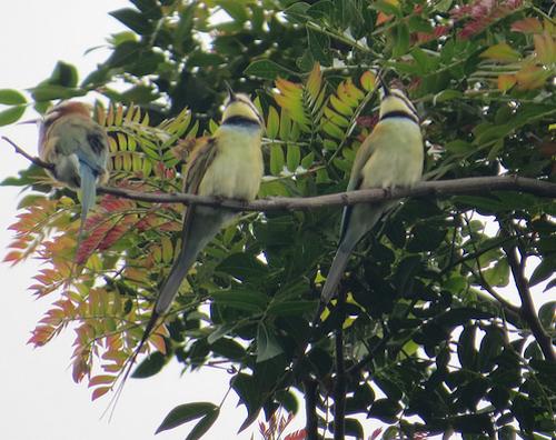bigobi birds