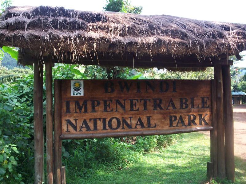 bwindi home of mountain gorillas