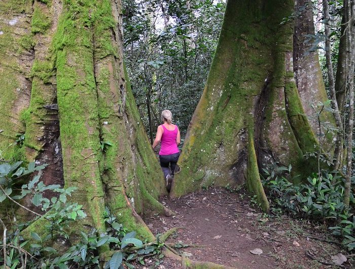 Hiking Uganda, Forest Hike Kibale Tour