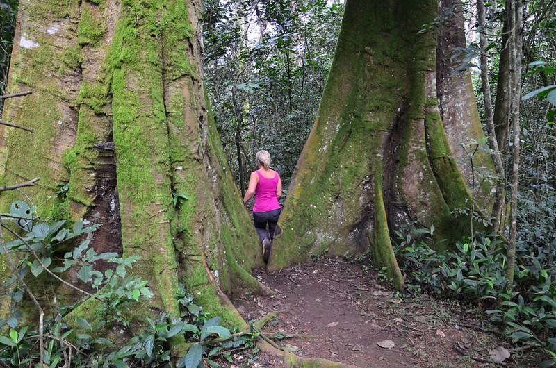 Kibale Hike