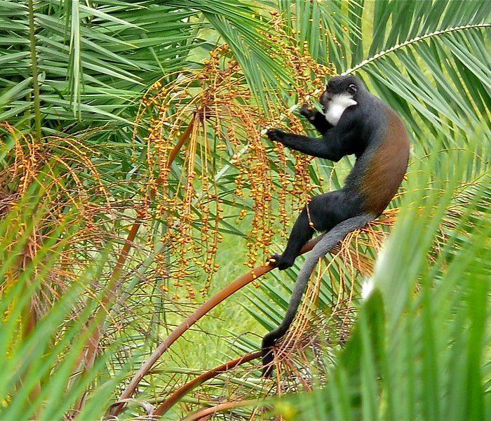 Primates Blog